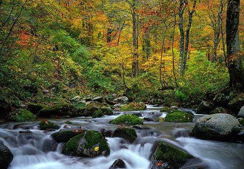Landschaft, Torrent, Herbstliche Blätter