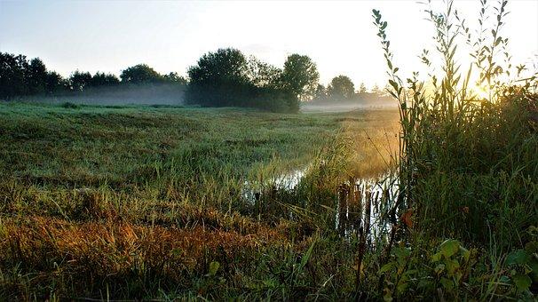 Neblig, Morgen, Sumpf, Sun, Landschaft