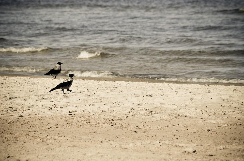 Latvia, Jurmala, Beach, Baltics, Crows, Water, Coast
