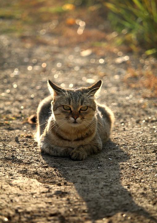 Velká příroda chlupatá kočička