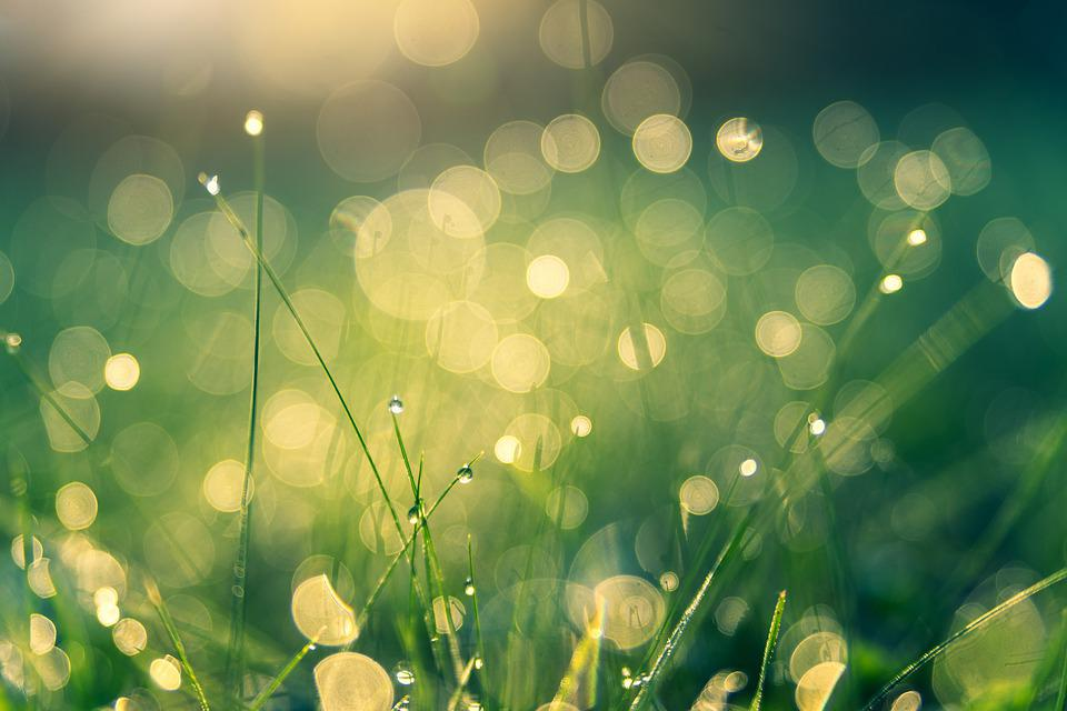 牧草地, ボケ, 自然, 露, 露のしずく, 点滴, 水, マクロ, 夏, 草, 風景, ぼかし, 緑, 太陽