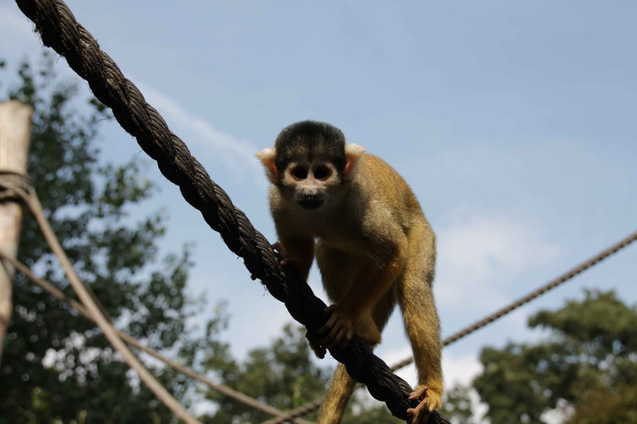 при обезьянка на ветке картинки необходима инсулиновая помпа
