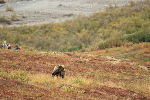 Bear Safety Tips - Campers, Hikers, and Backpackers