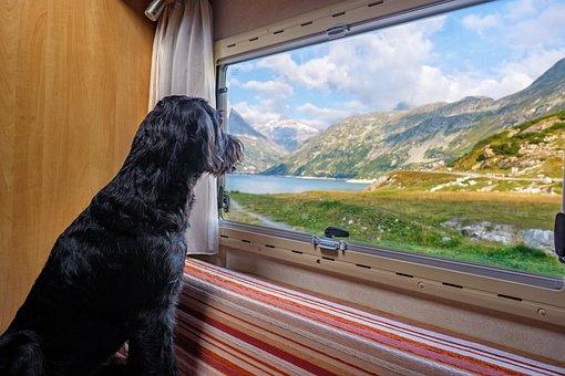 View, See, Dog, Labradoodle, Schnauzer