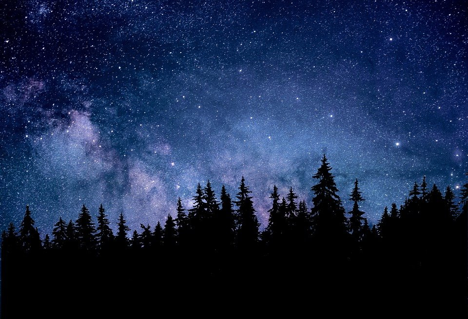 Night, Nature, Astronomy, Forest, Fir, Dark, Landscape