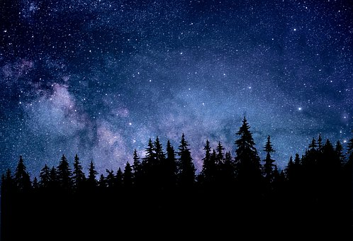 Night, Nature, Astronomy, Forest, Fir