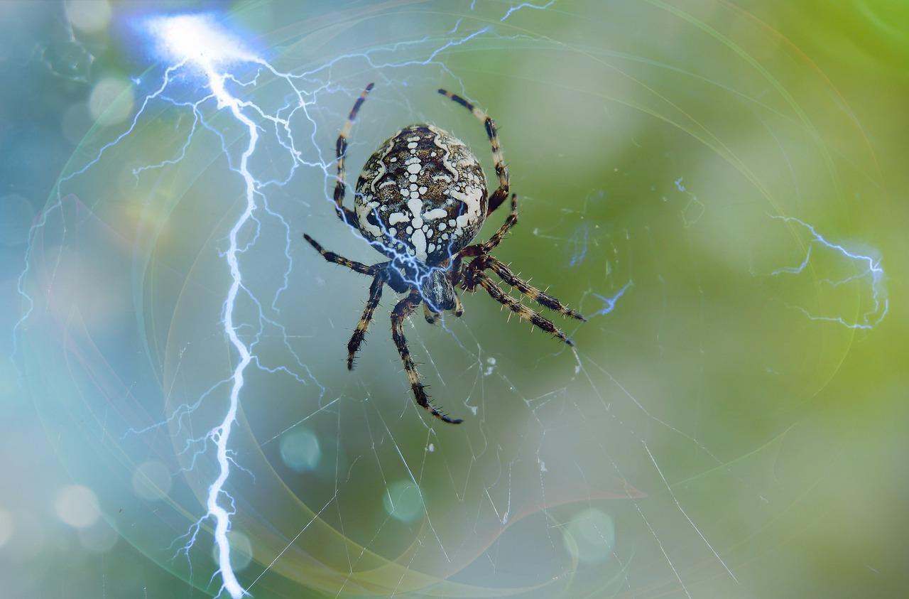 паук крестоносец в паутине на лопатке фото знак обнаружите