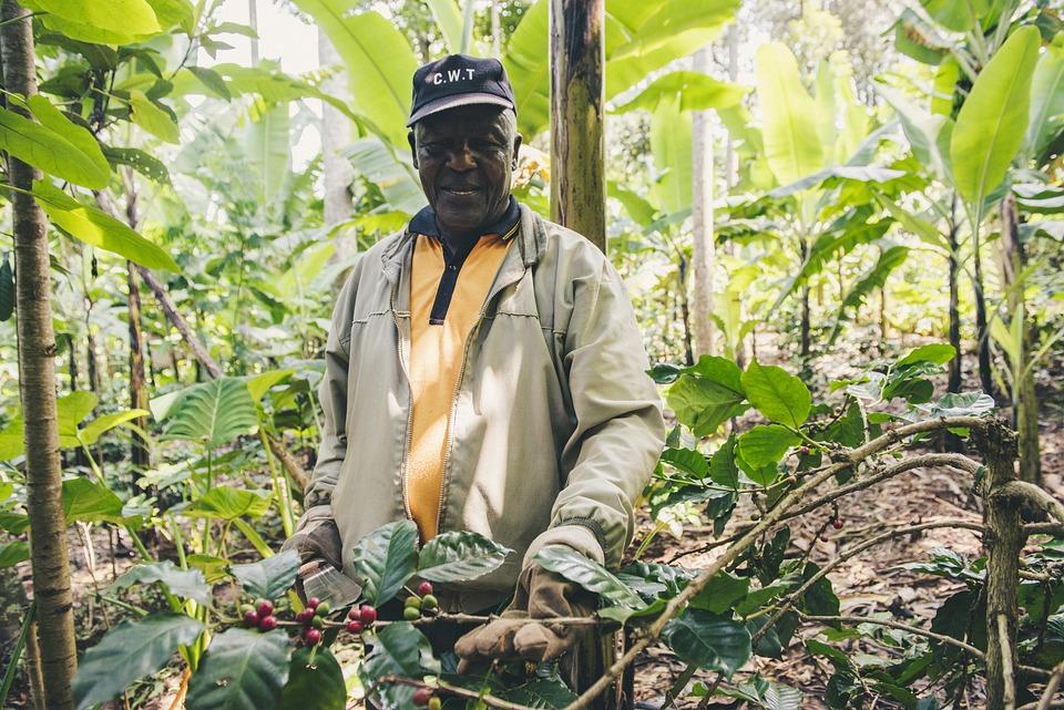 農家, ジャングル, タンザニア, アフリカ, 自然, ブッシュ, テクスチャ, コーヒー, 農業, 森林