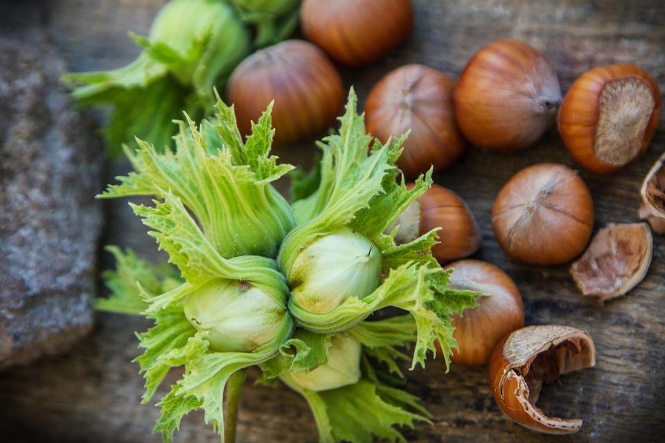 Lískový Ořech, Rada, Semeno, Jádro, Jídlo