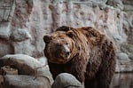 znieść, zwierzęcy, zoo