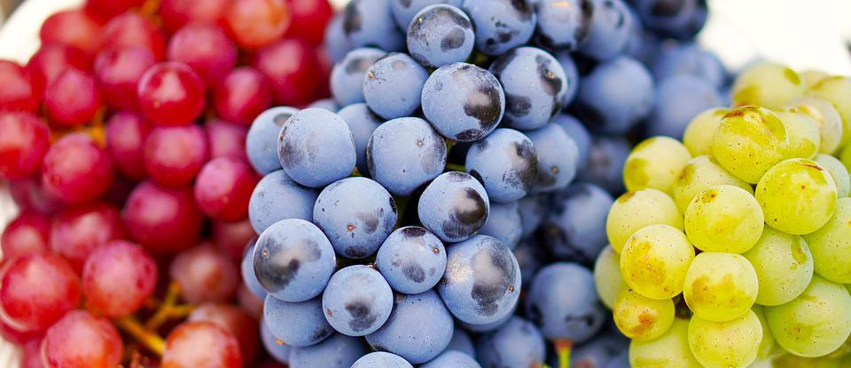 Grapes, Ripe, Harvest, Wine, Fruit, Sweet, Vitamins