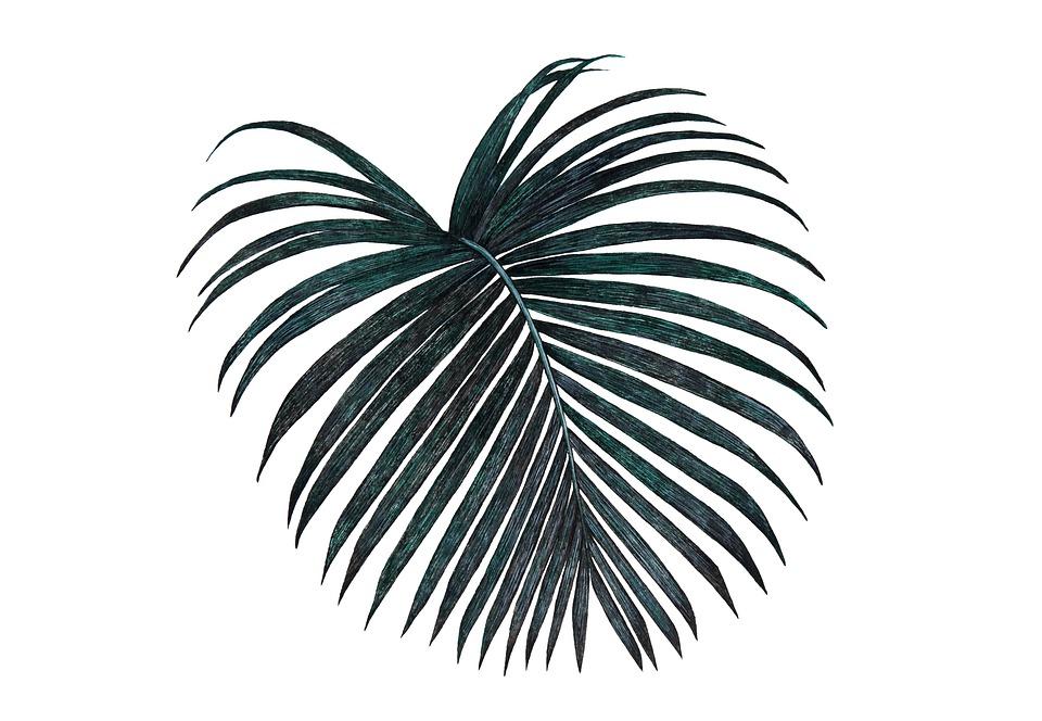 Black, Palm, Feuilles, Nature, Tropicaux, Isolé, Sur