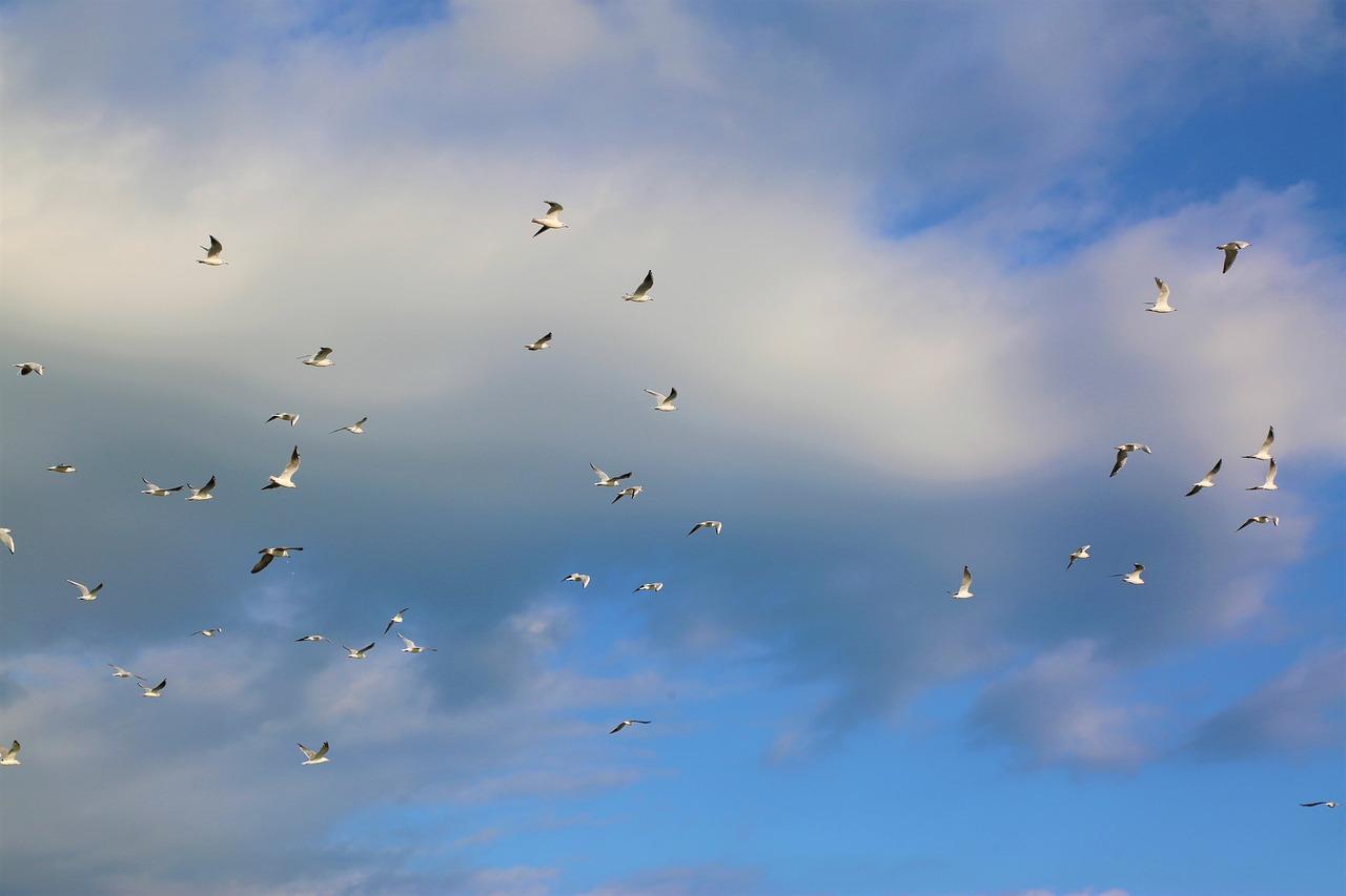 фотошоп анимированного картинки небо с птицами парами пляжи, увеселительные