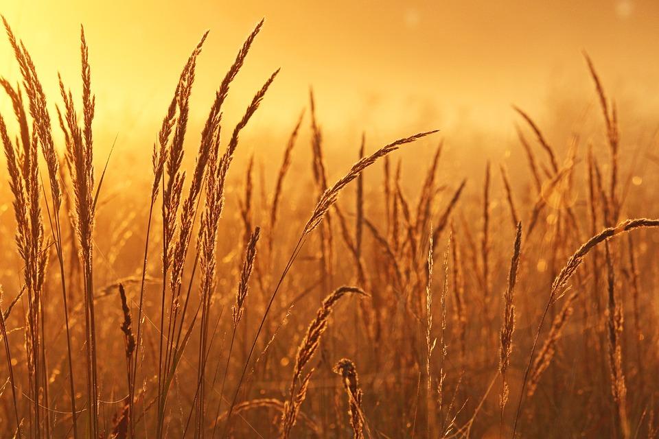 Sunrise, Nebbia Di Mattina, Stato D'Animo, Paesaggio