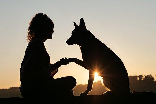 Friendship, Animal, Human, Sunrise