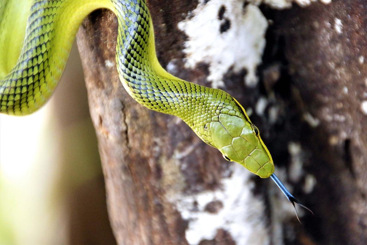 мульти змеи фото коллекциях