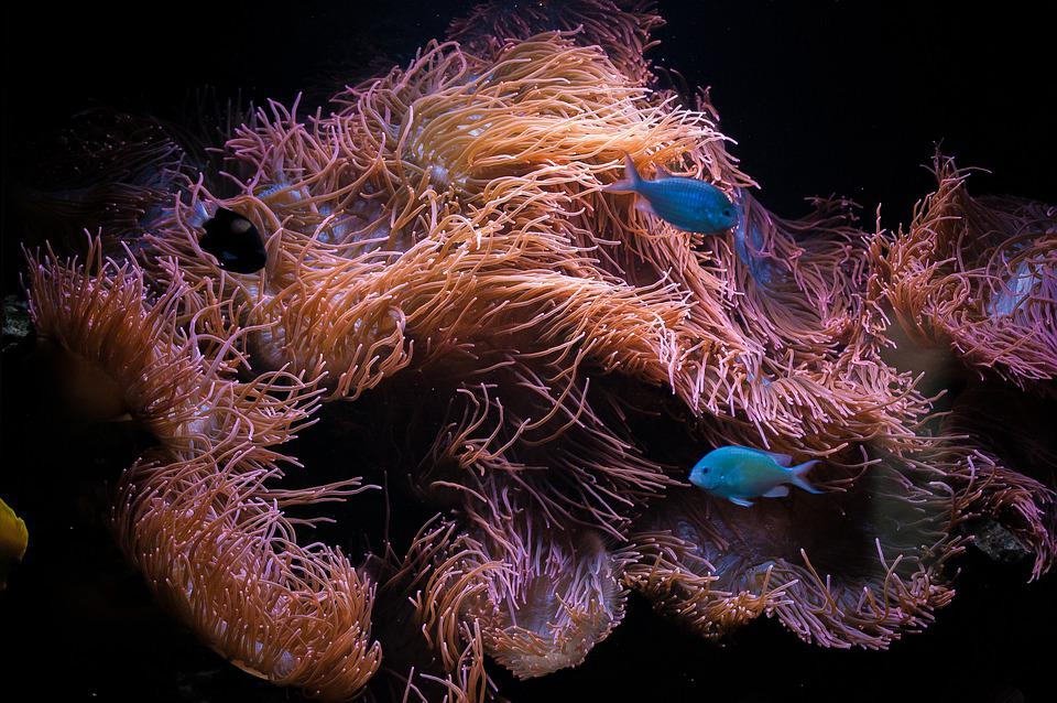 sok hal található a tengerben juri egyedül társul ep 3