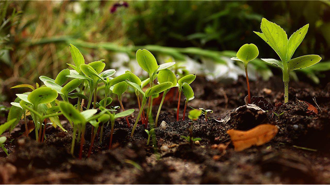 Notre sélection du TOP 5 des meilleurs livres sur la permaculture