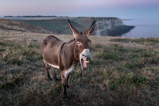 Etretat, Donkey, France, Animal, Tourism