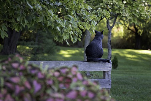 Schwarze Katze, Halloween, Gruselig