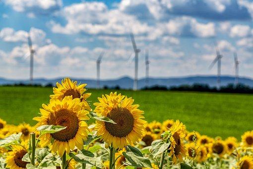 Sunflower, Summer, Sun, Nature, Flower