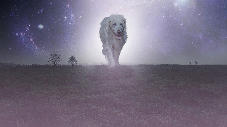 Dog, Fantasy, Photomontage, Atmosphere, Nature, Fog