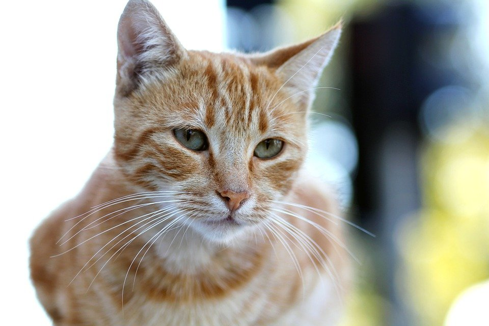 Zdarma obrázek kočička