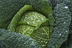 kapusta, warzyw, zdrowy