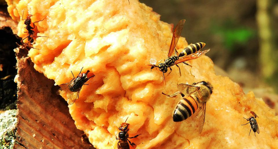 Garten Wespen Fliegen Kostenloses Foto Auf Pixabay