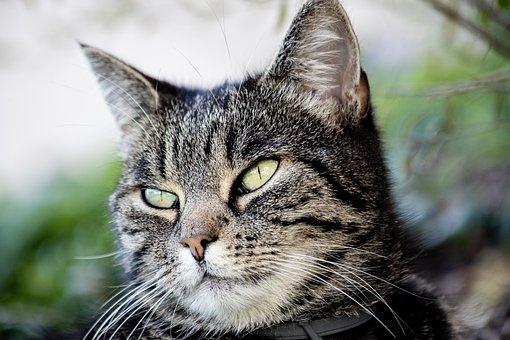 zblízka obrázky čiernej mačička video na XXX com