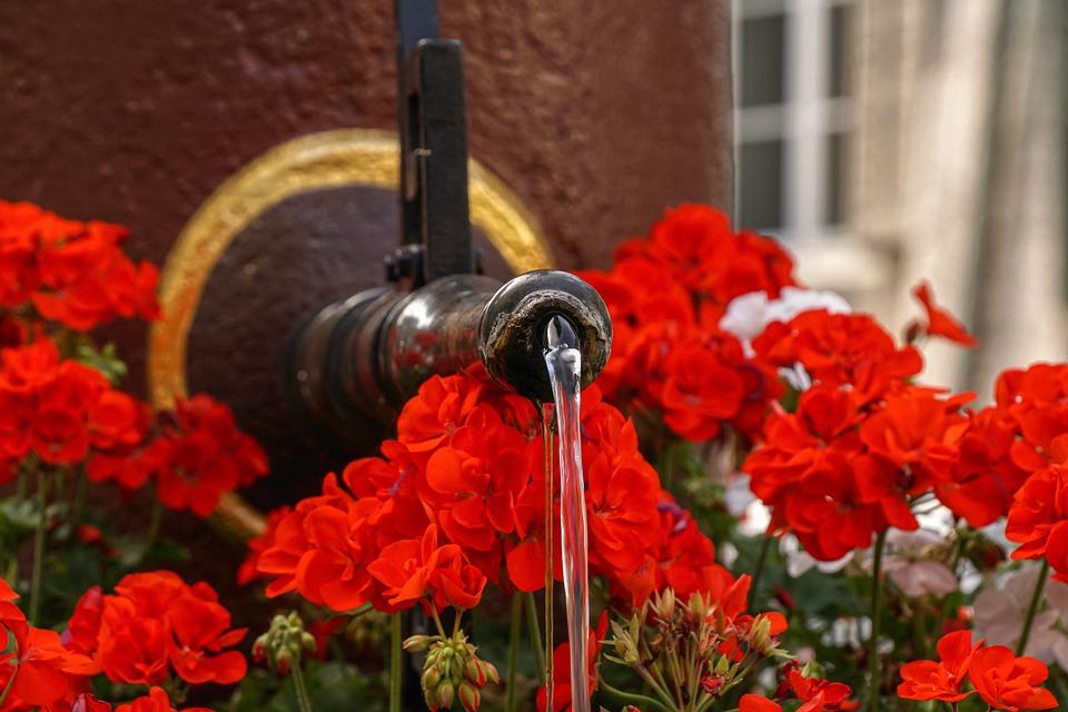 Fountain, Water, Jet d'Eau, Flowers, Flow, Geranium