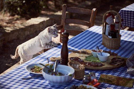 猫, テーブル, ダイニング テーブル, ネコ, ペット, 哺乳動物, 動物