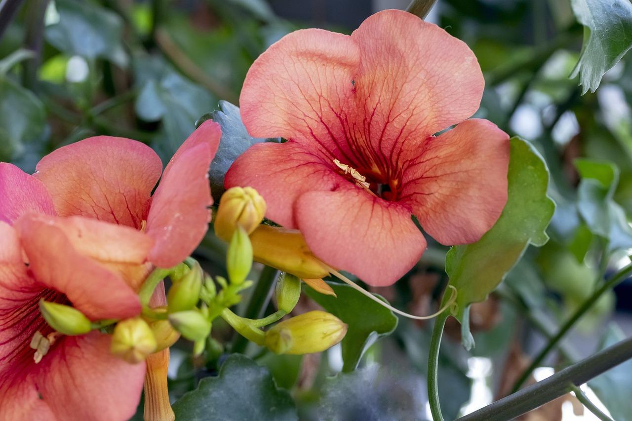 просто цветы до слез фото сотрудничаем только надежными