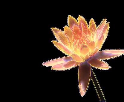 100 Free Water Lily Lotus Illustrations Pixabay