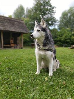 100+ Gambar Arsiran Anjing HD