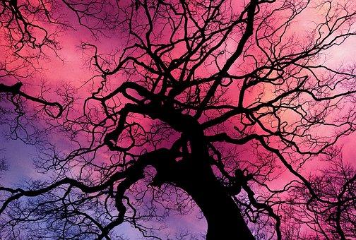 4 000 Free Aesthetic Tree Images Pixabay