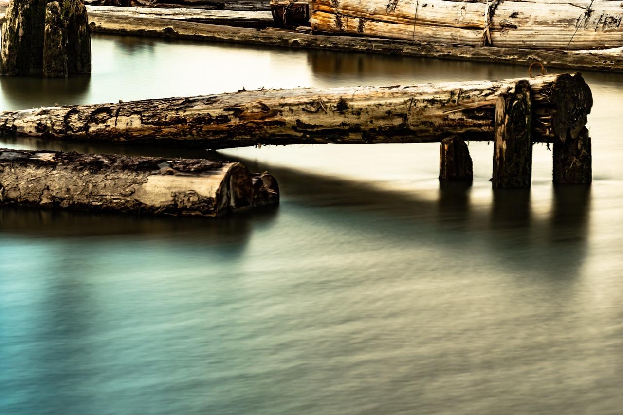 Картинка бревно в воде