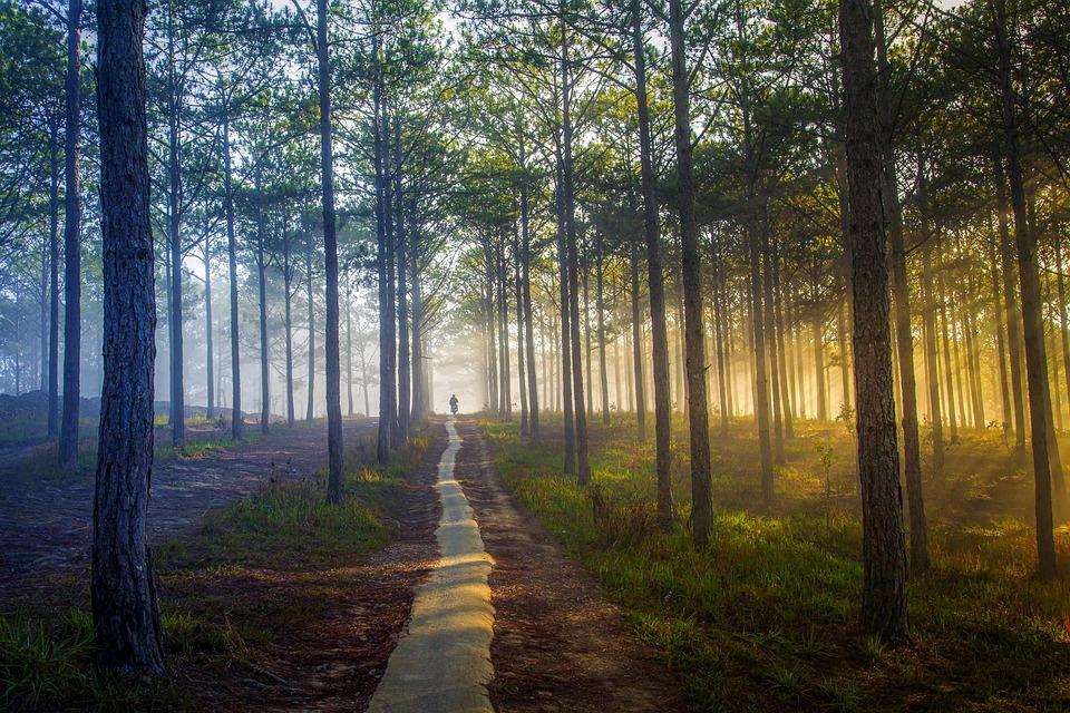 Ηλιοφάνεια, Δέντρα, Ήλιο Ray, Κίτρινο Ήλιο, Πράσινο