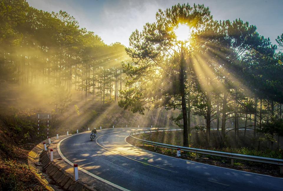 Sunshine, Trees, Sun Ray, Yellow Sunshine, Greenery