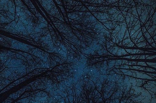 Bäume, Sterne, Universum, Landschaft