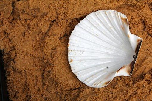 Эксперты прогнозируют снижение мирового производства двустворчатых моллюсков
