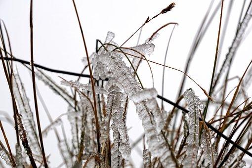 Grass, Blades Of Grass, Frost, Frozen