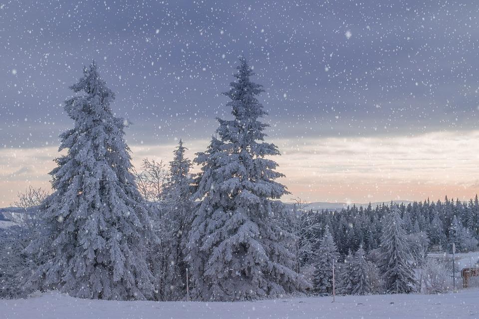 Wintry, Dawn, Secret, Light, Trees, Frost, Snow, Frozen