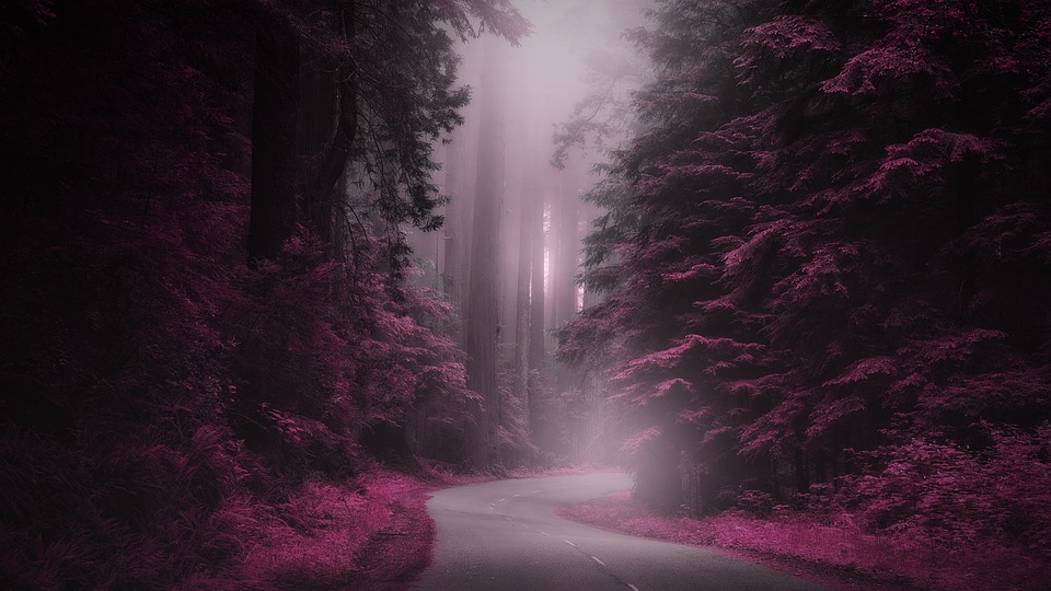 Mystery, Road, Fantasy, Magical, Fog, Forest, Nature