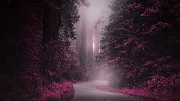 Mystery, Road, Fantasy, Magical, Fog