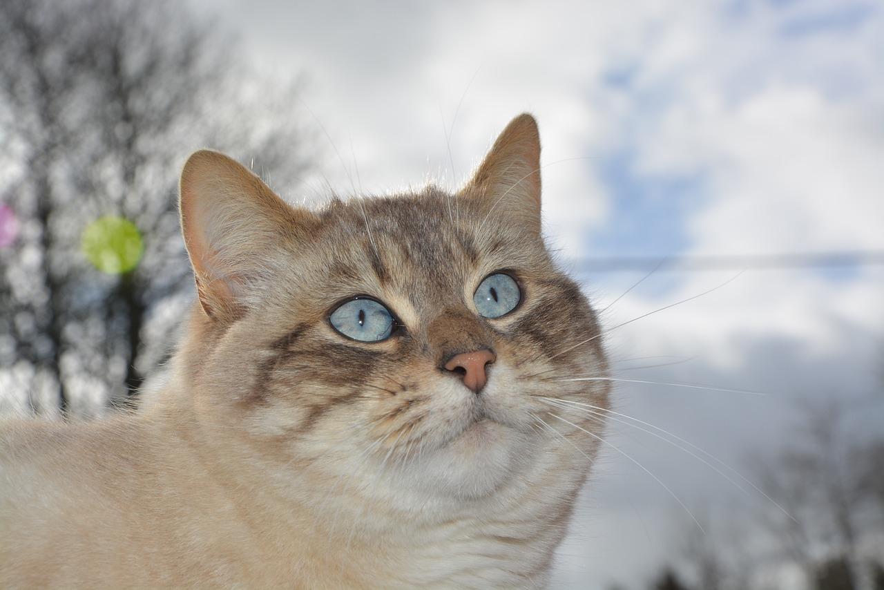 кошка нала фото фортуна