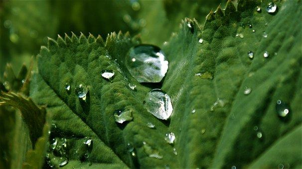Sheet, Water, Drops, Rain, Dew, Nature