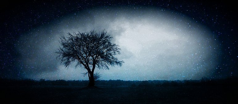 Dunkelheit, Nacht, Stern, Himmel, Baum