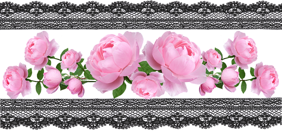 Border, Banner, Decoration, Floral, Pink Roses, Lace