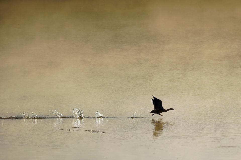 Rano, Mgła, Ptak, Siano, Jesień, Wschód, Krajobraz